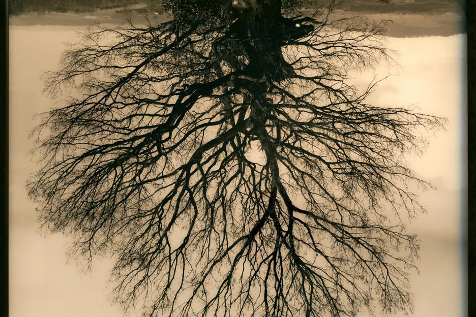 L'arbre qui ne meurt jamais